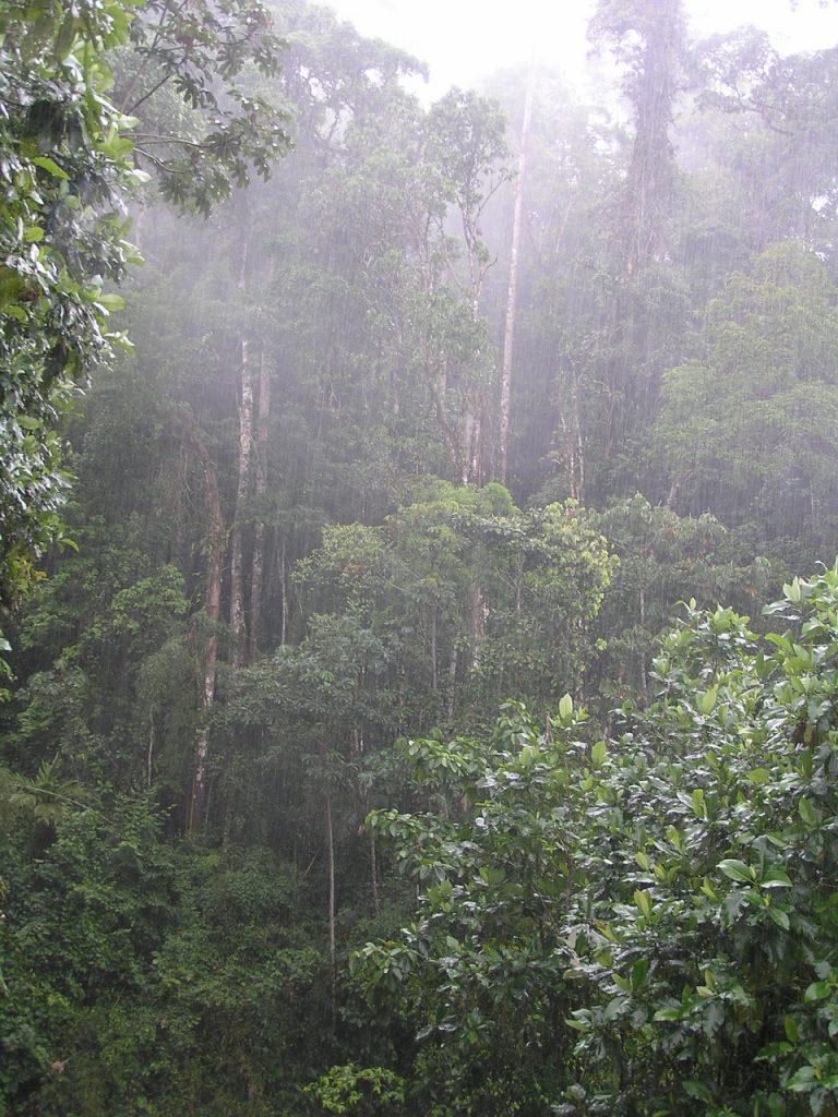 Artículos sobre el Agua – Ecosistemas Forestales y el Agua